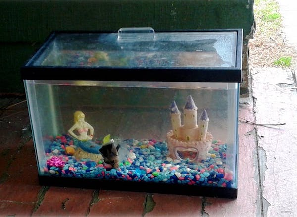 How To Clean A Fish Tank After A Fish Dies?