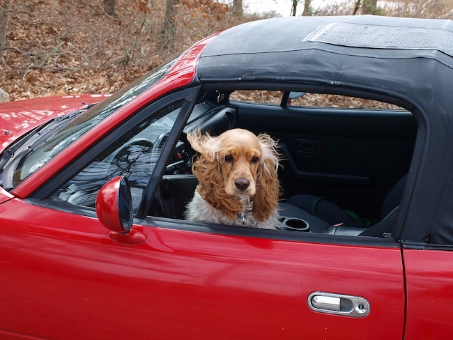 9 Ways to Get Dog Hair Out of Car Seats