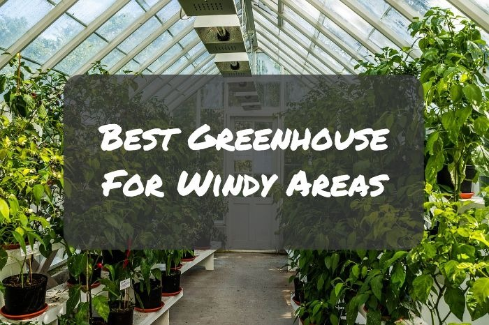 Best Greenhouse For Windy Areas