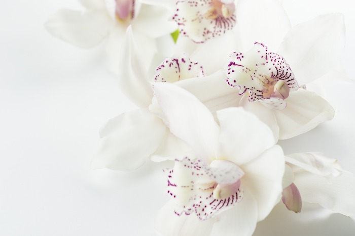 How to Care for Orchids in a Vase