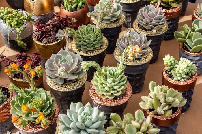 19 Tips To Keep Succulents Alive