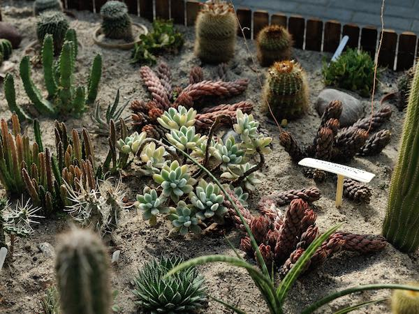 How To Care For Succulents Outdoors | Homelization