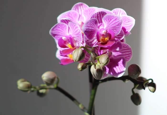How Long Do Orchids Live In a Pot